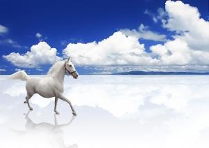 1388937 horse