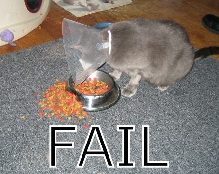 Bowl is fine. Collar is fine. Floor seems okay. How come the food is not being delivered? Dunno...not my problem.