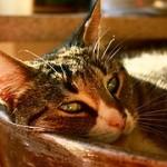 cat-725207__180