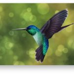 ONOS SDN Software Notches 8th Release With Hummingbird